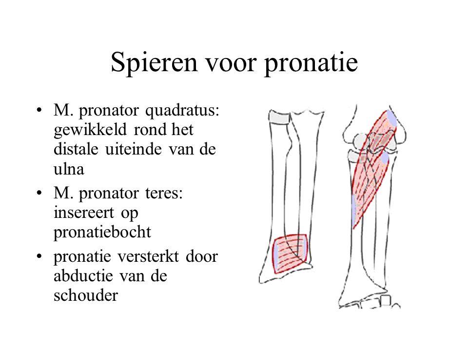 Spieren voor pronatie M. pronator quadratus: gewikkeld rond het distale uiteinde van de ulna. M. pronator teres: insereert op pronatiebocht.