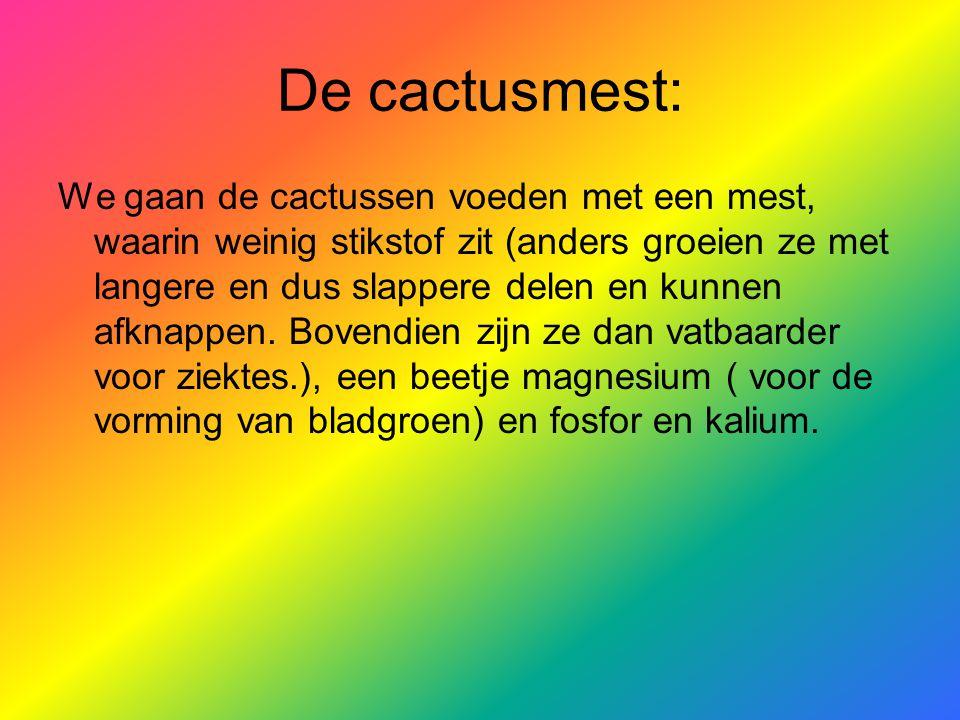 De cactusmest: