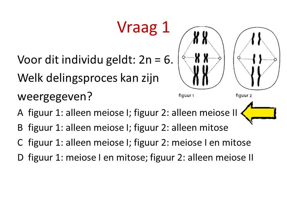 Vraag 1 Voor dit individu geldt: 2n = 6. Welk delingsproces kan zijn
