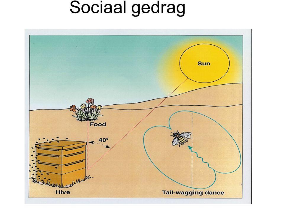 Sociaal gedrag