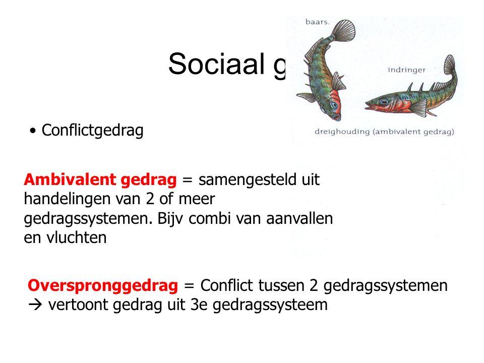 Sociaal gedrag Conflictgedrag
