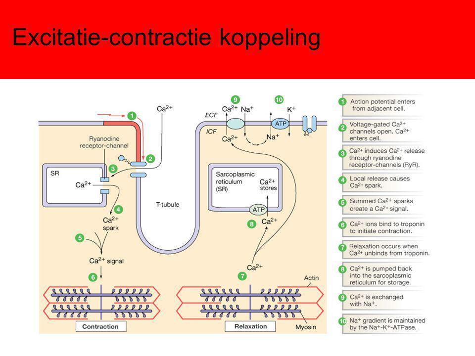Excitatie-contractie koppeling