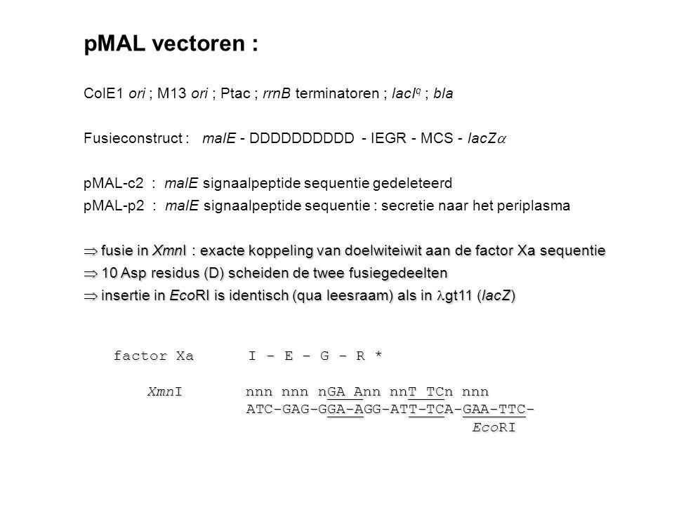 pMAL vectoren : ColE1 ori ; M13 ori ; Ptac ; rrnB terminatoren ; lacIq ; bla. Fusieconstruct : malE - DDDDDDDDDD - IEGR - MCS - lacZa.
