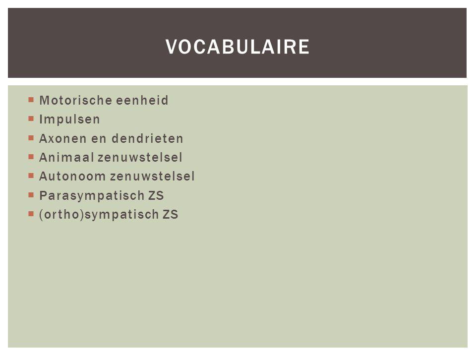 vocabulaire Motorische eenheid Impulsen Axonen en dendrieten