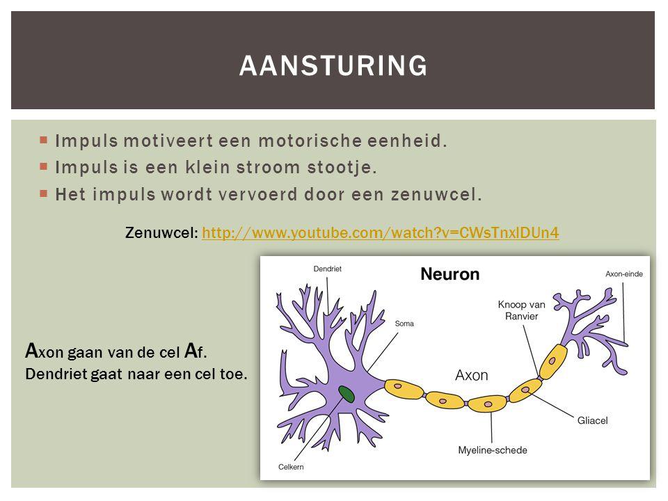 aansturing Axon gaan van de cel Af.