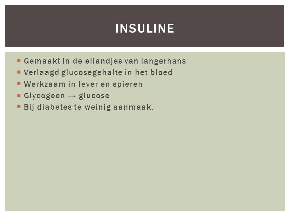 insuline Gemaakt in de eilandjes van langerhans