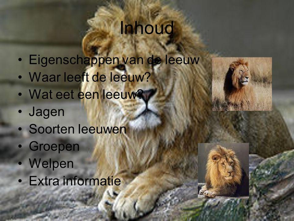 Inhoud Eigenschappen van de leeuw Waar leeft de leeuw