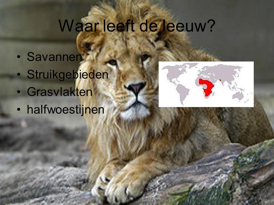 Waar leeft de leeuw Savannen Struikgebieden Grasvlakten