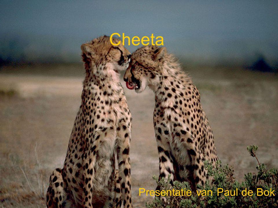 Presentatie van Paul de Bok