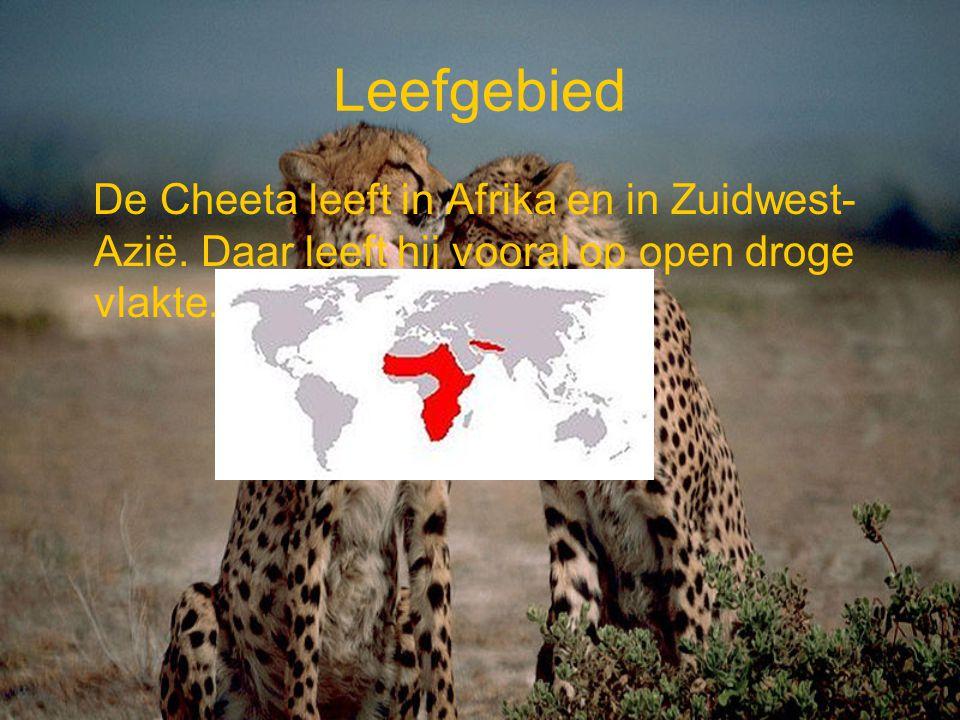 Leefgebied De Cheeta leeft in Afrika en in Zuidwest-Azië.