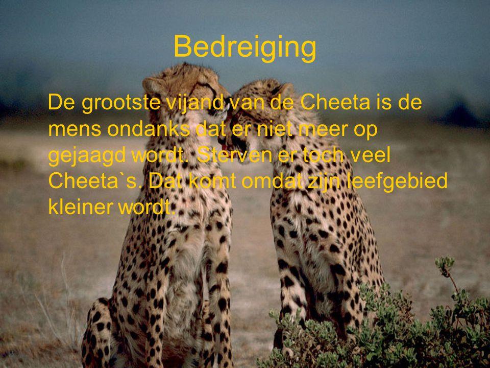 Bedreiging