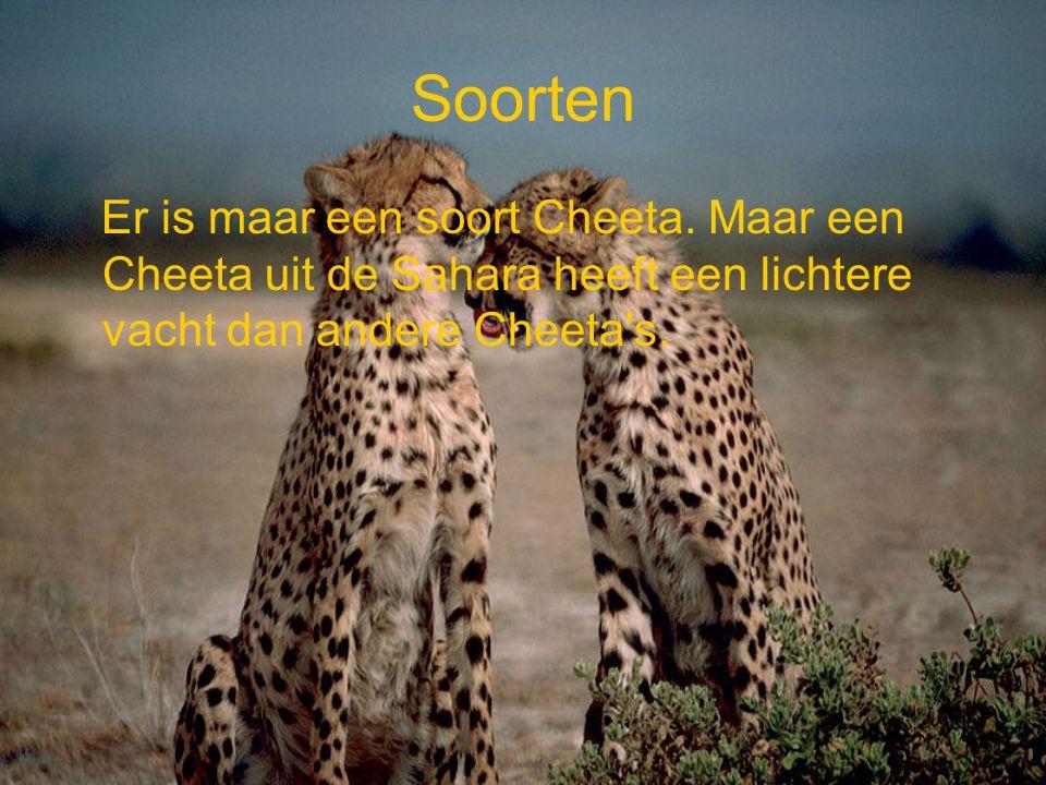 Soorten Er is maar een soort Cheeta.