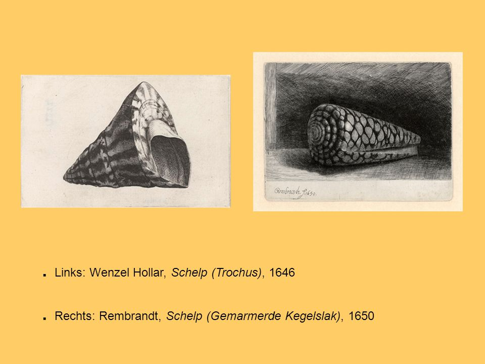 Links: Wenzel Hollar, Schelp (Trochus), 1646