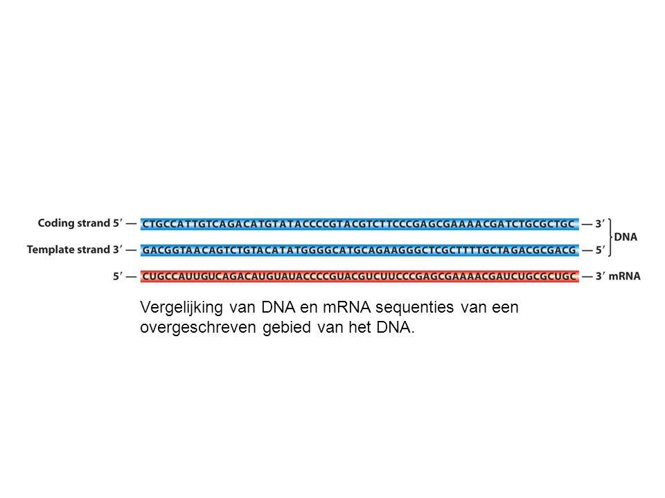 Vergelijking van DNA en mRNA sequenties van een overgeschreven gebied van het DNA.