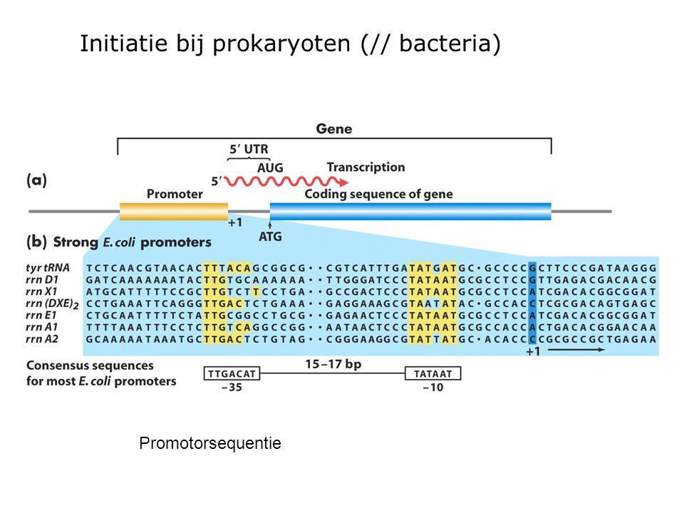Initiatie bij prokaryoten (// bacteria)