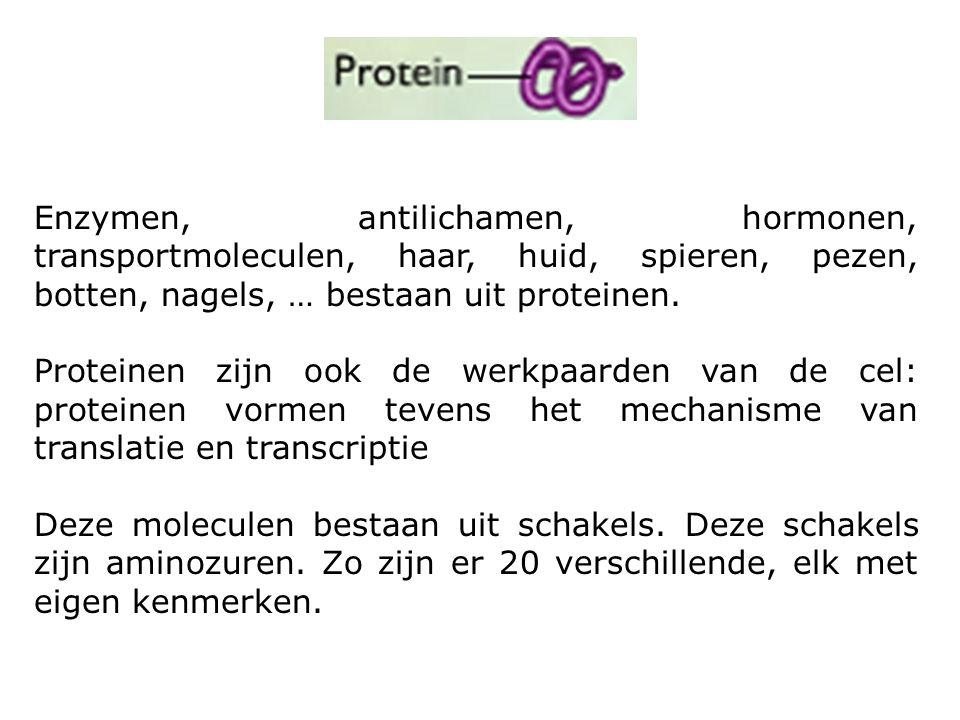Enzymen, antilichamen, hormonen, transportmoleculen, haar, huid, spieren, pezen, botten, nagels, … bestaan uit proteinen.