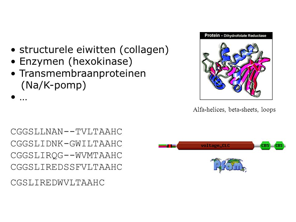 structurele eiwitten (collagen) Enzymen (hexokinase)