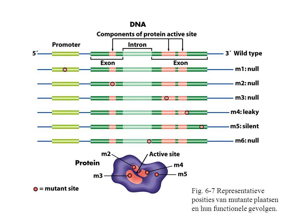 Fig. 6-7 Representatieve posities van mutante plaatsen en hun functionele gevolgen.