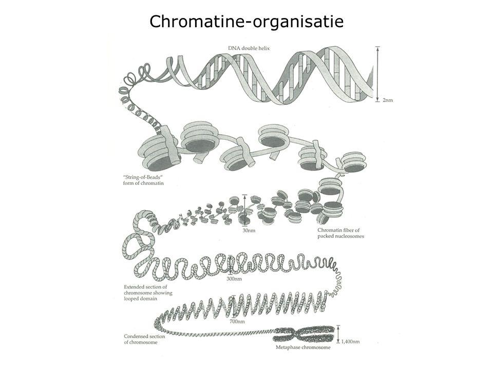 Chromatine-organisatie