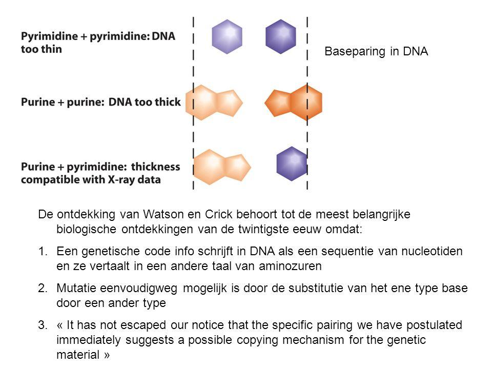 Baseparing in DNA De ontdekking van Watson en Crick behoort tot de meest belangrijke biologische ontdekkingen van de twintigste eeuw omdat: