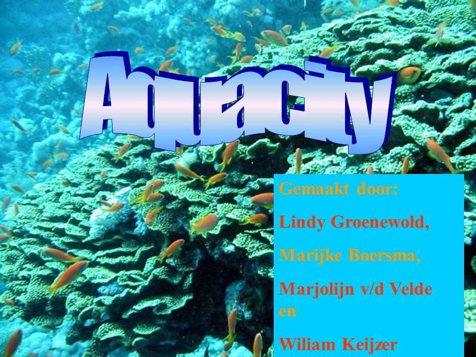 Aquacity Gemaakt door: Lindy Groenewold, Marijke Boersma,
