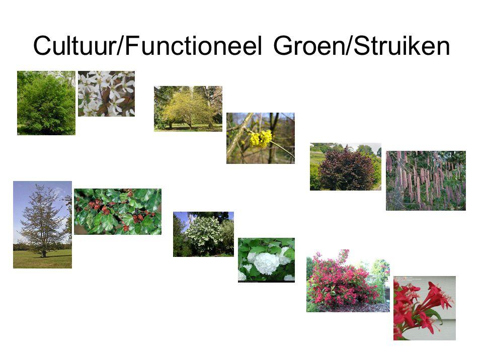 Cultuur/Functioneel Groen/Struiken