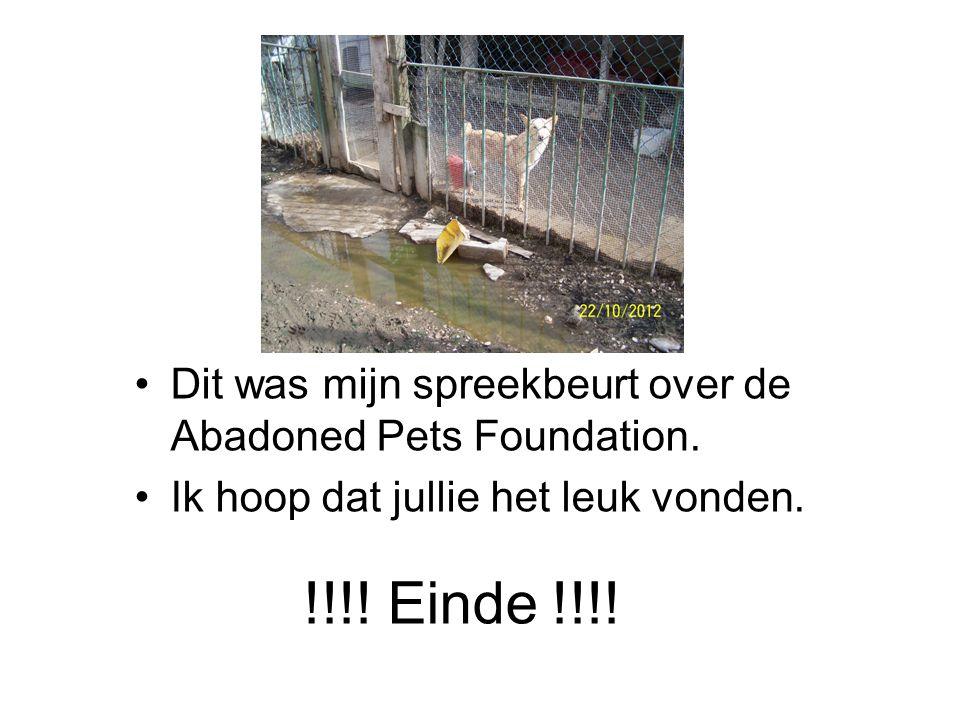 Dit was mijn spreekbeurt over de Abadoned Pets Foundation.