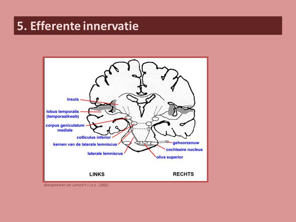 5. Efferente innervatie Overgenomen van Lamoré P.J.J e.a. (2002)