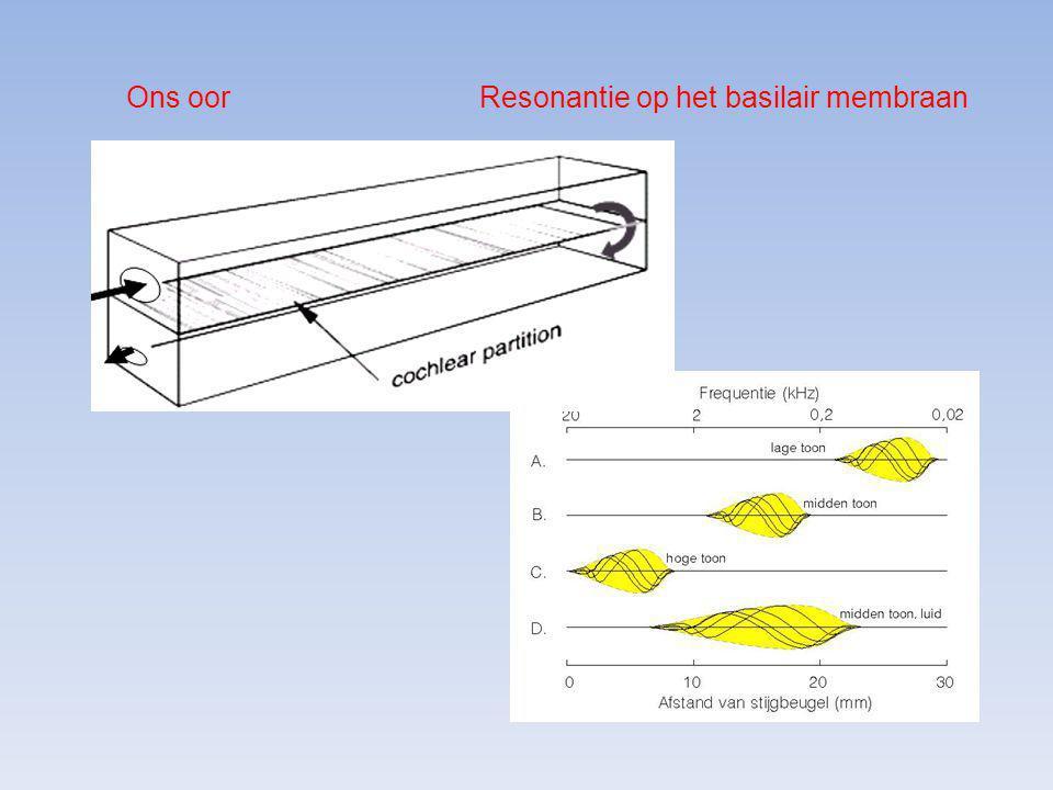 Ons oor Resonantie op het basilair membraan