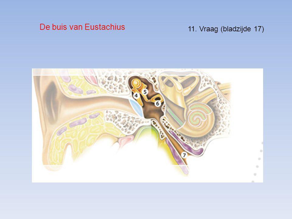 De buis van Eustachius 11. Vraag (bladzijde 17)