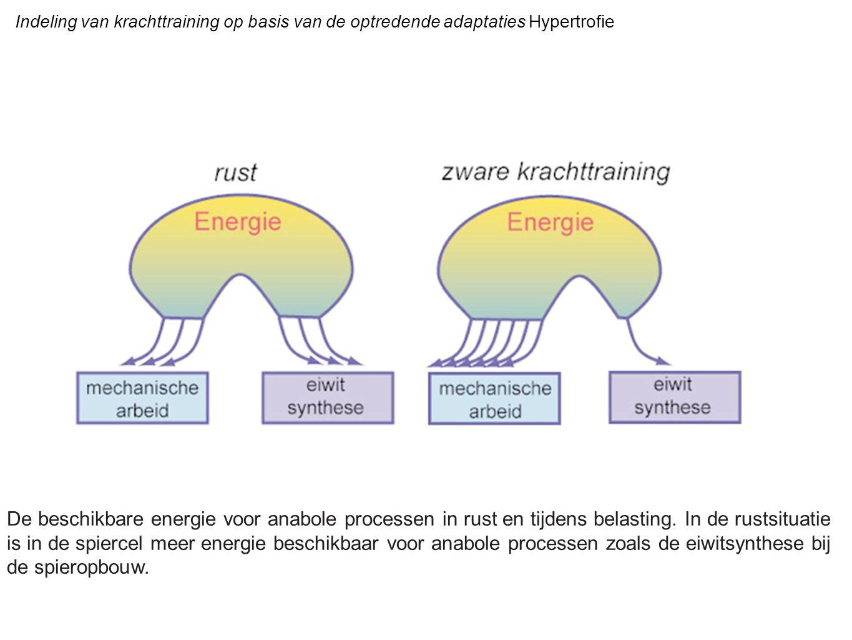 Indeling van krachttraining op basis van de optredende adaptaties Hypertrofie