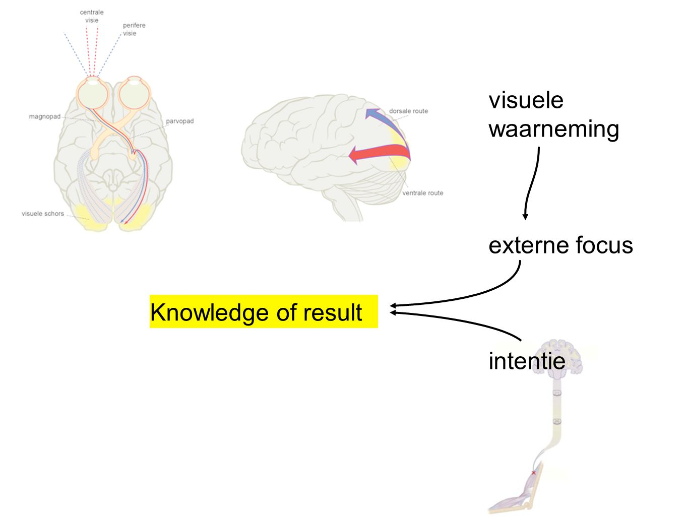 visuele waarneming externe focus intentie Knowledge of result