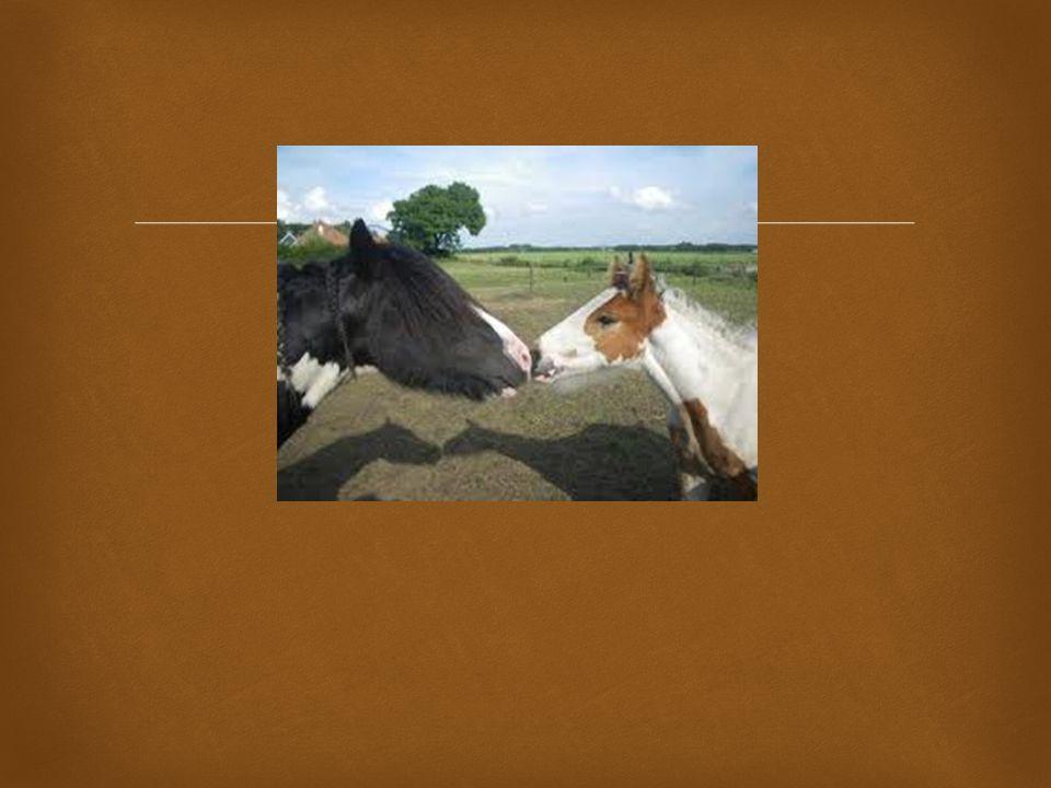 Foto 3. idem, ga ook in op verschillen, de schaduw achter in de wei, valt deze op Wat zegt dit over u Oog voor detail