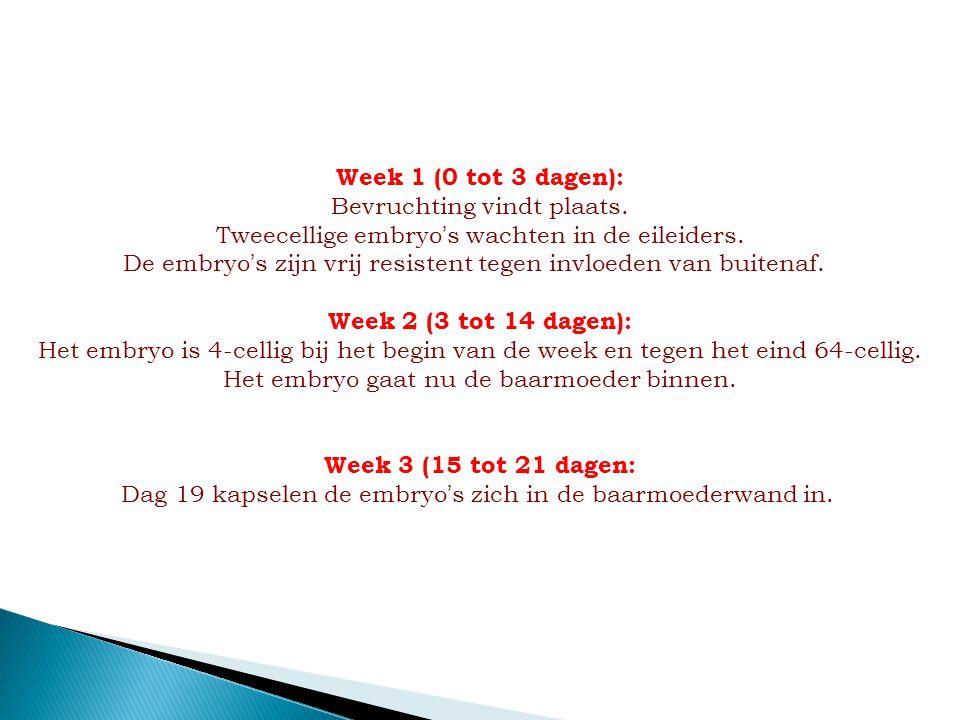 Week 1 (0 tot 3 dagen): Bevruchting vindt plaats