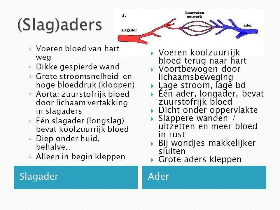 (Slag)aders Slagader Ader Voeren koolzuurrijk bloed terug naar hart