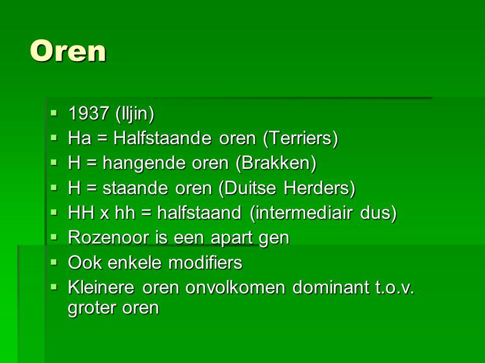 Oren 1937 (Iljin) Ha = Halfstaande oren (Terriers)