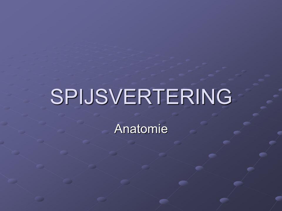 SPIJSVERTERING Anatomie