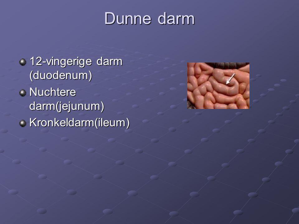 Dunne darm 12-vingerige darm (duodenum) Nuchtere darm(jejunum)