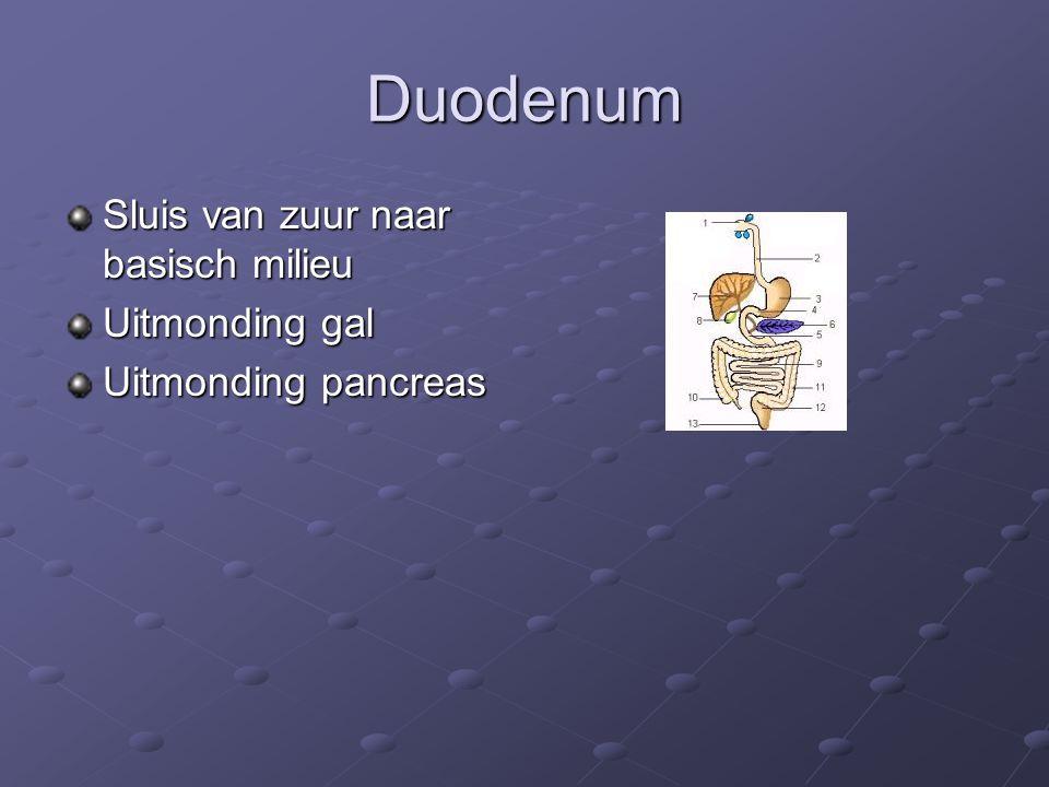 Duodenum Sluis van zuur naar basisch milieu Uitmonding gal