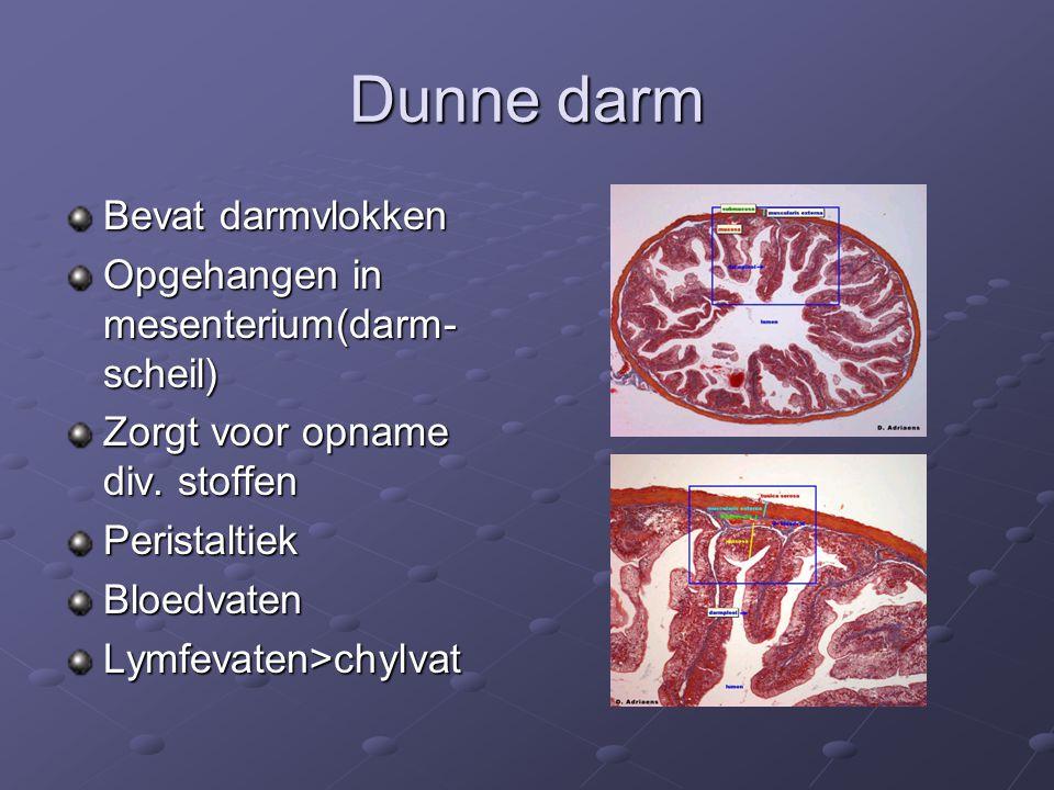 Dunne darm Bevat darmvlokken Opgehangen in mesenterium(darm-scheil)