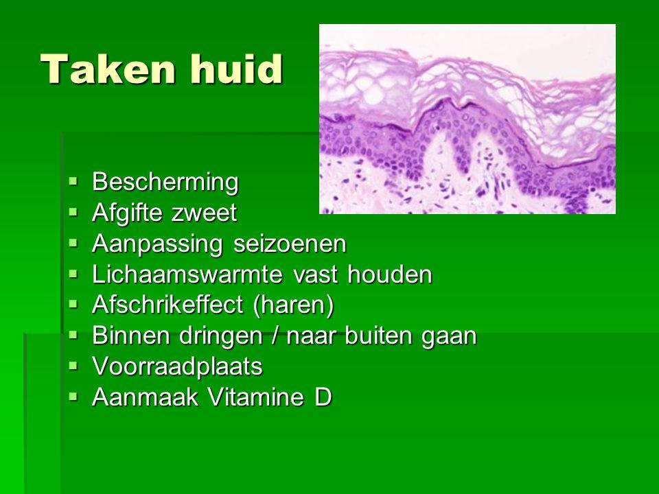 Taken huid Bescherming Afgifte zweet Aanpassing seizoenen