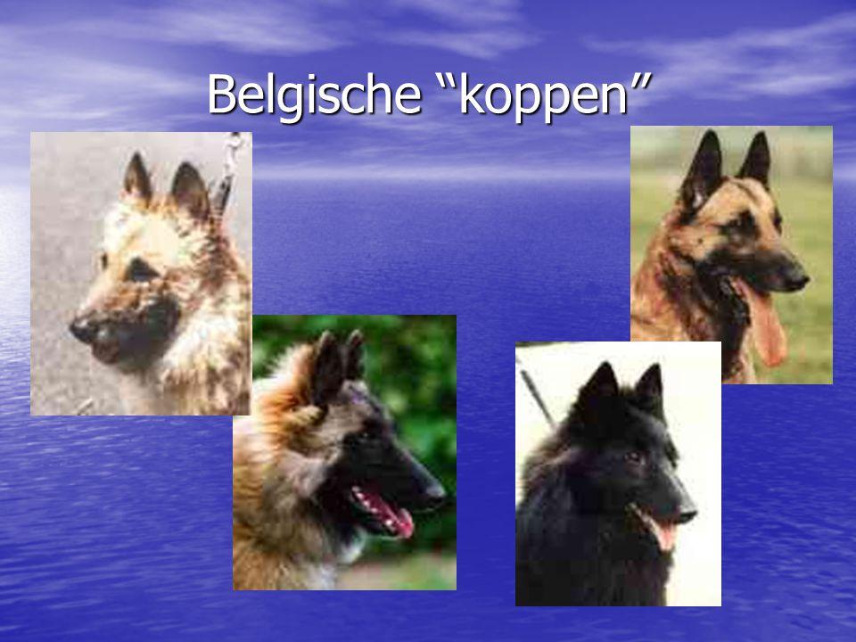 Belgische koppen