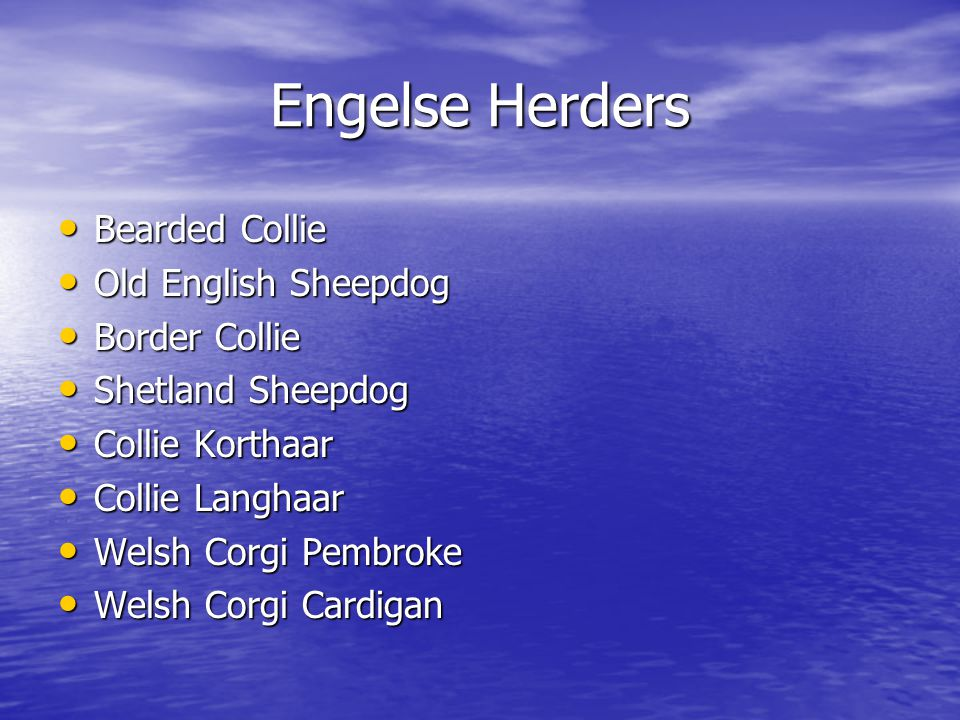 Engelse Herders Bearded Collie Old English Sheepdog Border Collie