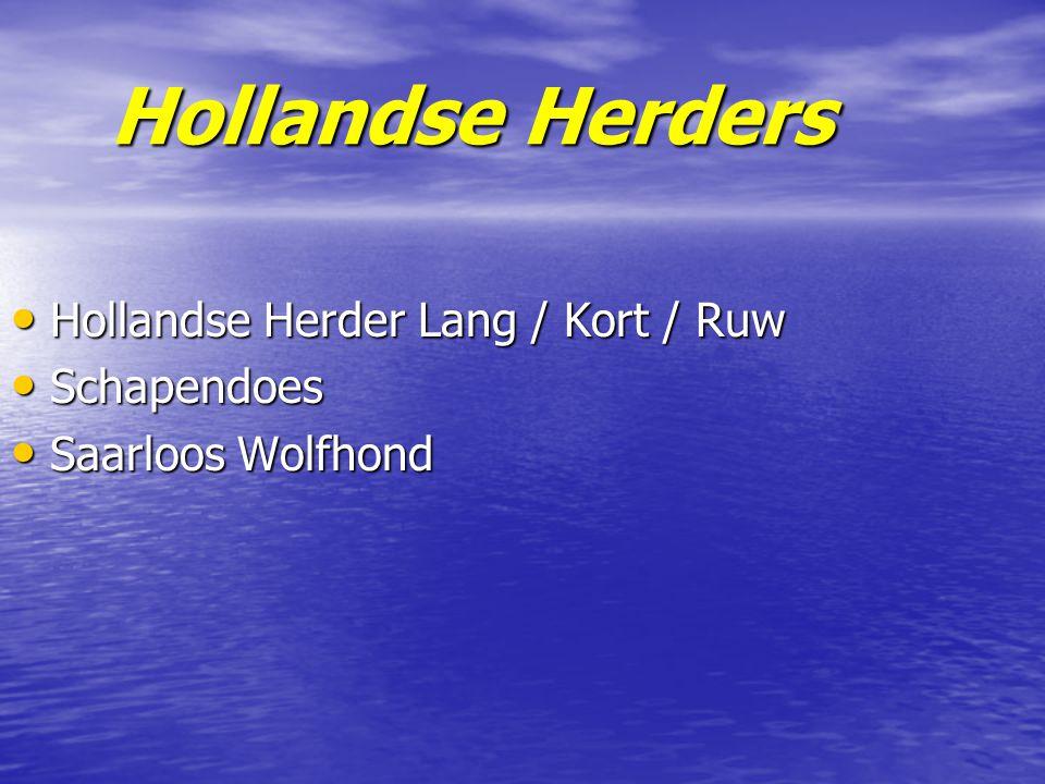 Hollandse Herders Hollandse Herder Lang / Kort / Ruw Schapendoes