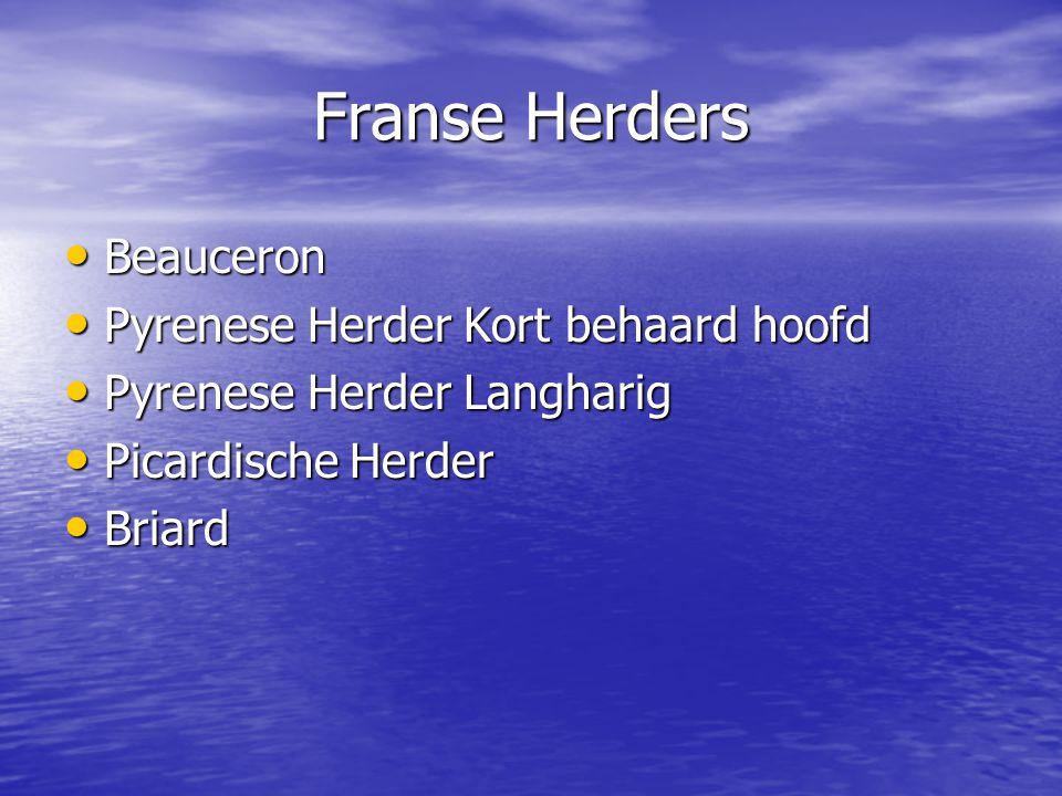 Franse Herders Beauceron Pyrenese Herder Kort behaard hoofd
