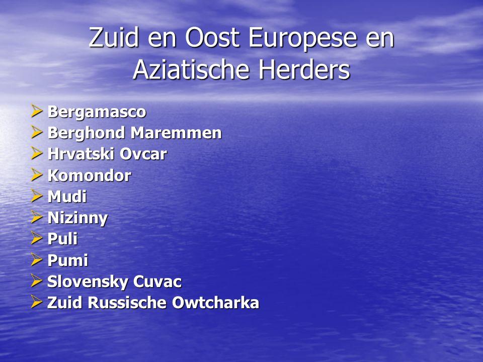 Zuid en Oost Europese en Aziatische Herders