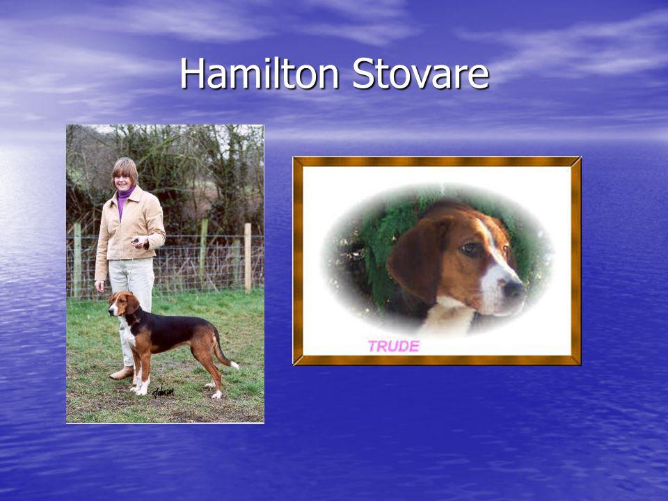 Hamilton Stovare