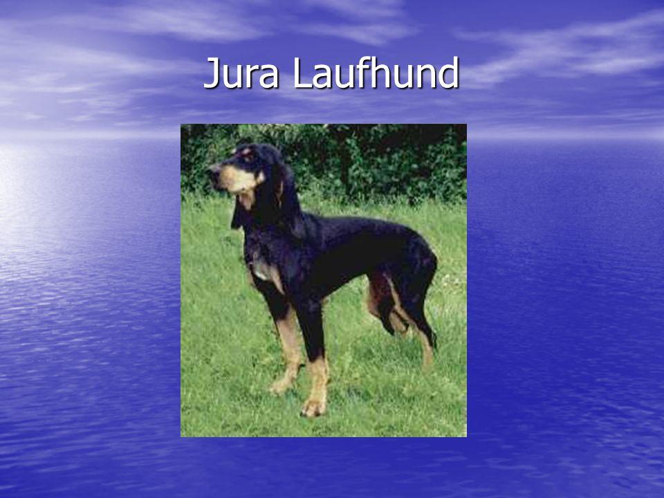 Jura Laufhund
