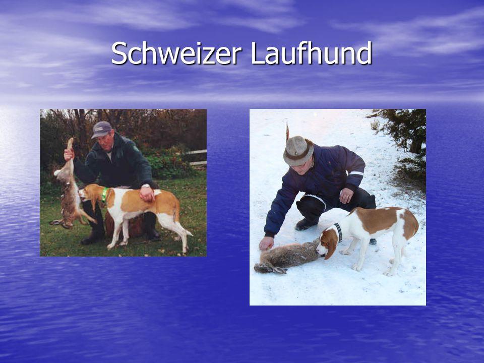 Schweizer Laufhund
