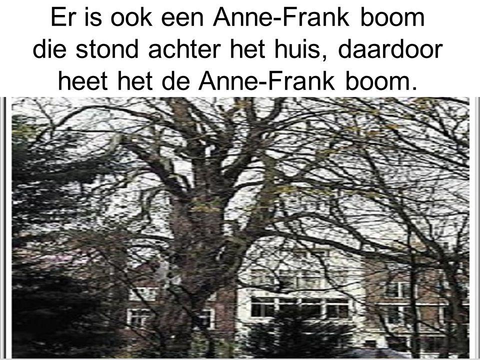 Er is ook een Anne-Frank boom die stond achter het huis, daardoor heet het de Anne-Frank boom.